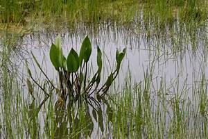 Wasserpflanzen Teich Kaufen : wasserpflanzen foto bild landschaft bach fluss see ~ Michelbontemps.com Haus und Dekorationen