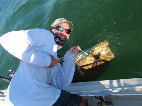 grouper goliath fishing fish catch