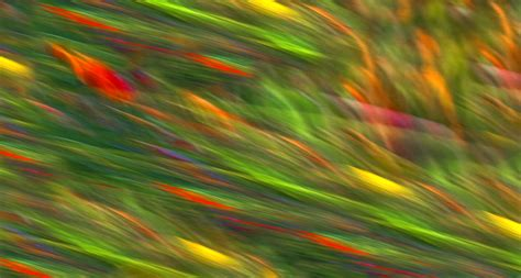 Mark Lissickwildlight Nature Photography And Workshops