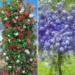Winterharte Kübelpflanzen Als Sichtschutz : hecken und fertig hecken als sichtschutz ~ Michelbontemps.com Haus und Dekorationen