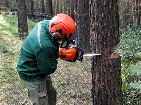 Einen Baum Faellen by Einen Baum F 228 Llen