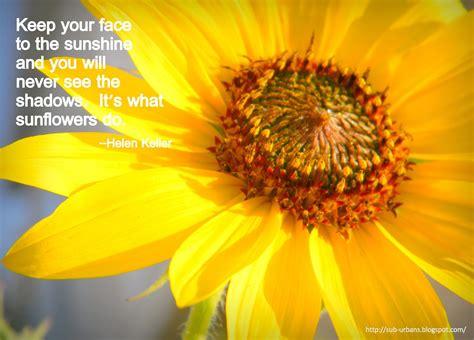 august sunflower quotes quotesgram