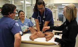 Cestaff Education California Veterinary Specialists