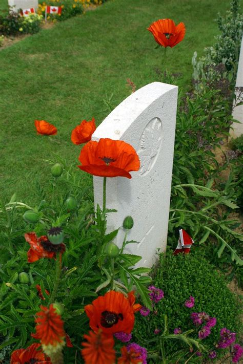72 Best Images About Poppies  Remembrance Day On Pinterest