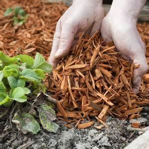 Que Mettre Au Sol Pour éviter Les Mauvaises Herbes : choisir le bon paillis pour couvrir le sol du jardin ~ Dailycaller-alerts.com Idées de Décoration