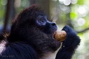 Spider Monkey eating | Flickr - Photo Sharing!
