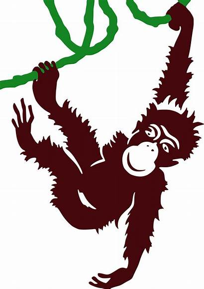 Monkey Vine Hanging Cartoon Clipart Jungle Zoo