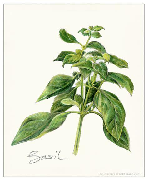 trofie pasta  pesto recipe magnolia days
