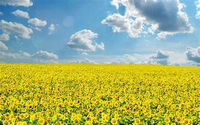 Sunny Bright Sky Field Nature Yellow Clouds