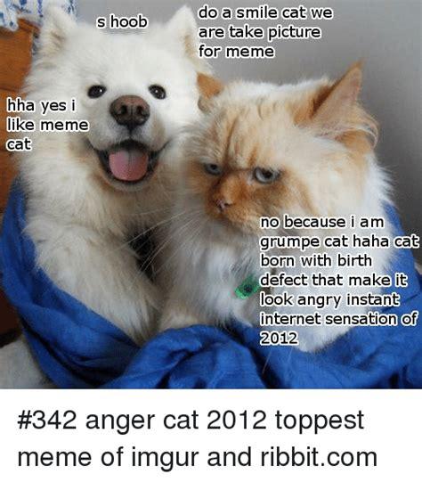 Internet Cat Meme - 25 best memes about toppest toppest memes
