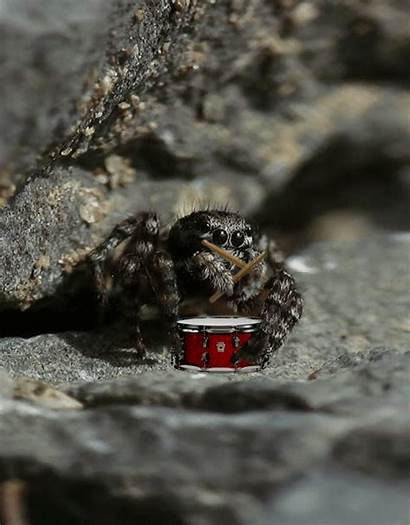 Gifdump Daily Spider Gifs Funny Jumping Animated