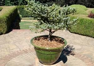 Arbres Fruitiers Nains En Pleine Terre : arbre en pot terrasse quel arbre en pot plein soleil ~ Premium-room.com Idées de Décoration