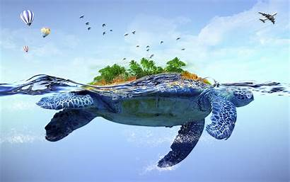 Turtle Backgrounds Sea Funny Pixelstalk
