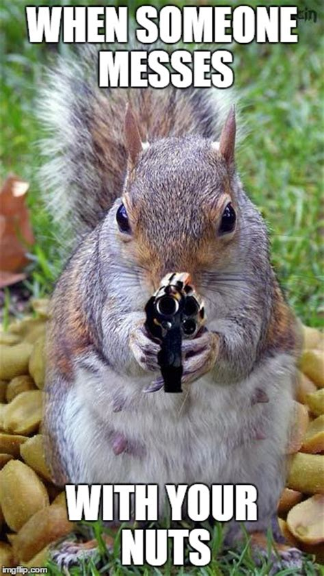 Squirrel Nuts Meme - funny squirrel memes nuts