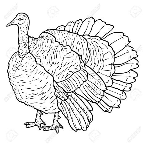 turkey drawing images  getdrawings