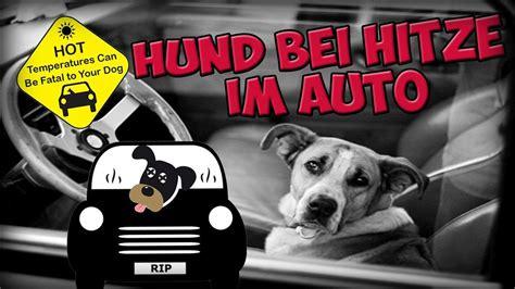im auto hund bei hitze im auto warnung vor qualvollem tod im auto