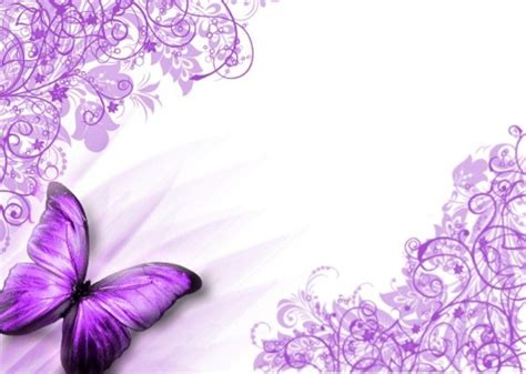 Beautiful Animated Butterfly Wallpapers - animated beautiful purple butterflies butterflies purple