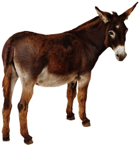 dine   donkeys  huge    cross inn