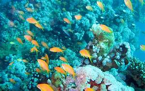 Underwater Reef Background Pictures to Pin on Pinterest ...
