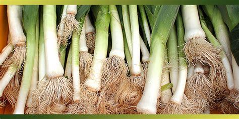 cuisiner un poireau le poireau l un des plus populaires de nos légumes je
