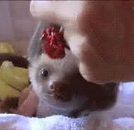 Sloth GIF - Find & Share on GIPHY