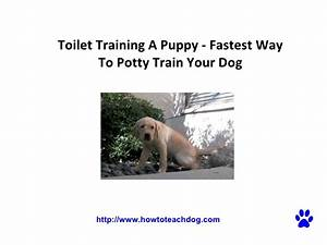 Toilet training a puppy fastest way to potty train your dog for Dog potty training problems