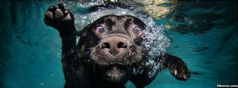 funny dog  water facebook cover photo fbcovercom
