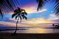 Palm Tree Sunset Beach Hawaii