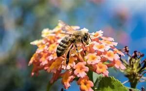 Welche Blumen Für Bienen : wie bekommen blumen ihre farbe blog floraqueen deutschland ~ Eleganceandgraceweddings.com Haus und Dekorationen