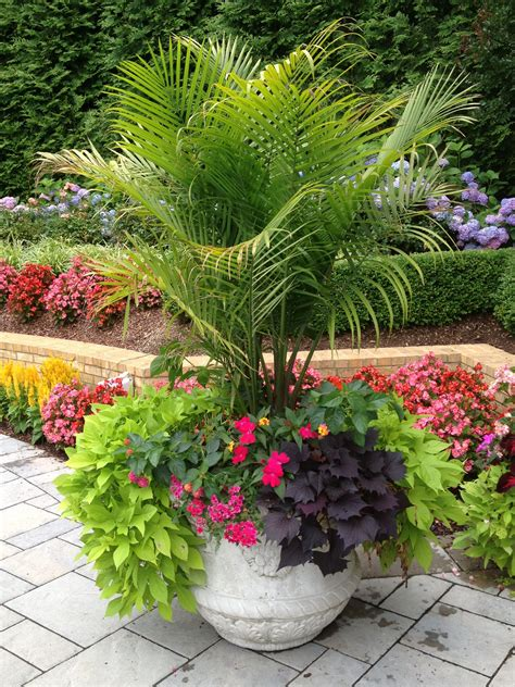 potted trees for patio sometimes a large planter that is dramatic is all you need 4373