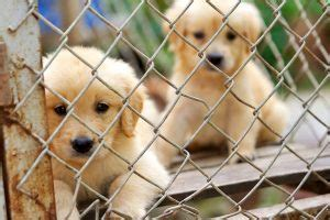 animal shelters   open