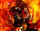 Image result for Cool Amazon Fire Tablet Wallpapers