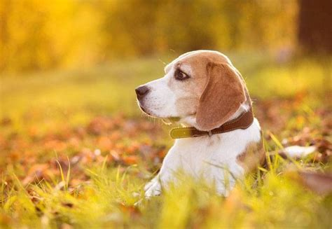 Hunting Dog Names Perfect For Your Male Or Female Pup