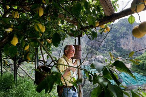 amalfi coast  business  lemons   york times