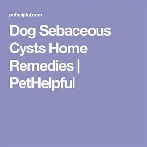 Dog Sebaceous Cysts Home Remedies