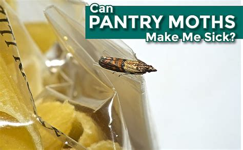 Can Pantry Moths Make Me Sick?