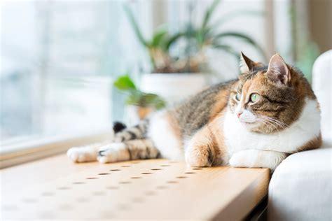 Geldbaum » Giftig Für Katzen Und Andere Haustiere?