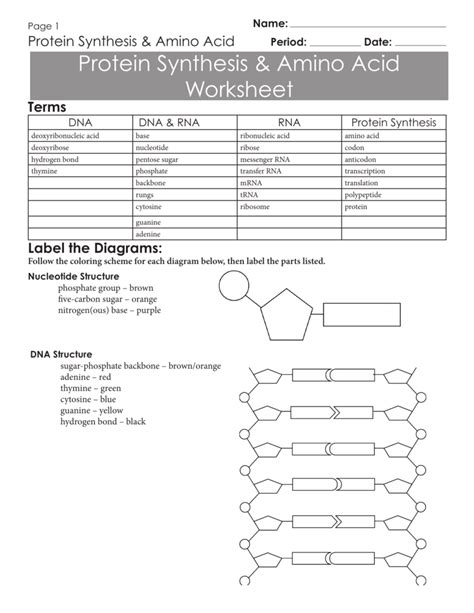 Dna vs rna to understand fully the different processes involved in gene expression, it is key that you can know the differences between dna and rna. 32 Dna Rna And Snorks Worksheet Answers - Notutahituq Worksheet Information