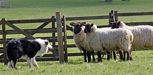 Shabden Park Farm's open day: June 9   Inside Croydon
