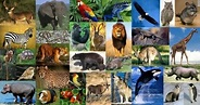 Animalia - Creatures Great and Small