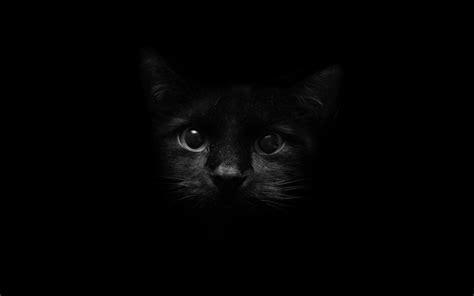 Background Black Cat by Cats 22 Black Cat Wallpaper Black Cat Wallpaper 14