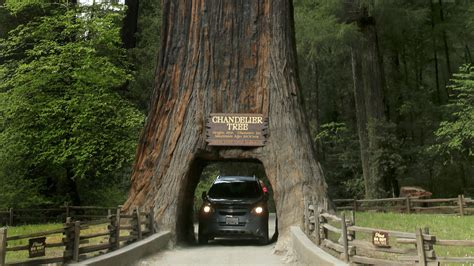 California's redwoods: In the land of the giants - LA Times
