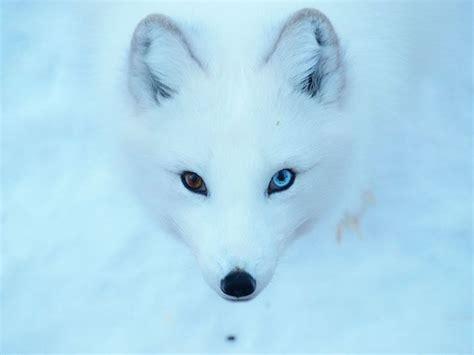 unusual  amazingly cute animals