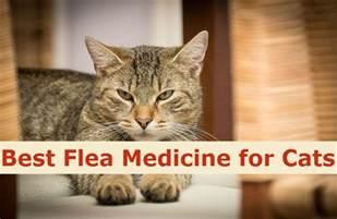 best flea for cats best flea medicine for cats to keep fleas away
