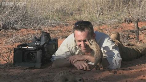 magic meerkat moments planet earth  bbc  youtube