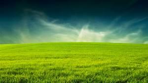 Grass wallpaper | 1920x1080 | #43176