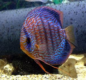 52 best images about Fish Tanks For Hubby on Pinterest ...
