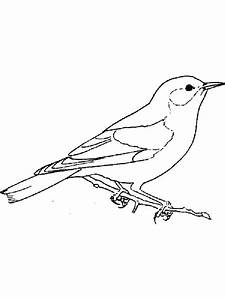 How To Draw A Northern Mockingbird