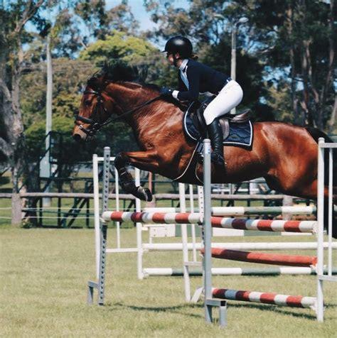 connemara horsezone ponies horses