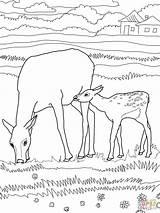 Elk Coloring Bull Mother Printable Wapiti Animals Drawing Supercoloring Sheep Animal Coloringhome Categories sketch template